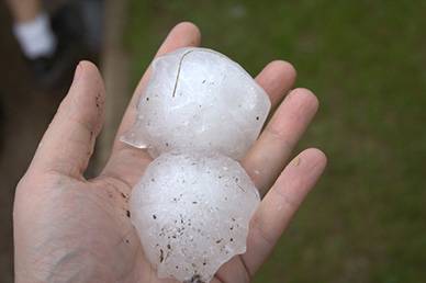 A person holding hail balls that have fallen from a hailstorm